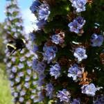bluebumblebee