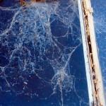 bluecobweb