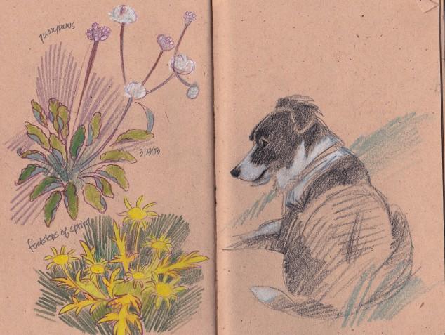 Lucyw:flowers