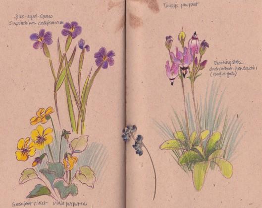 pawprintflowers