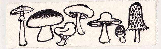 mushroom_3