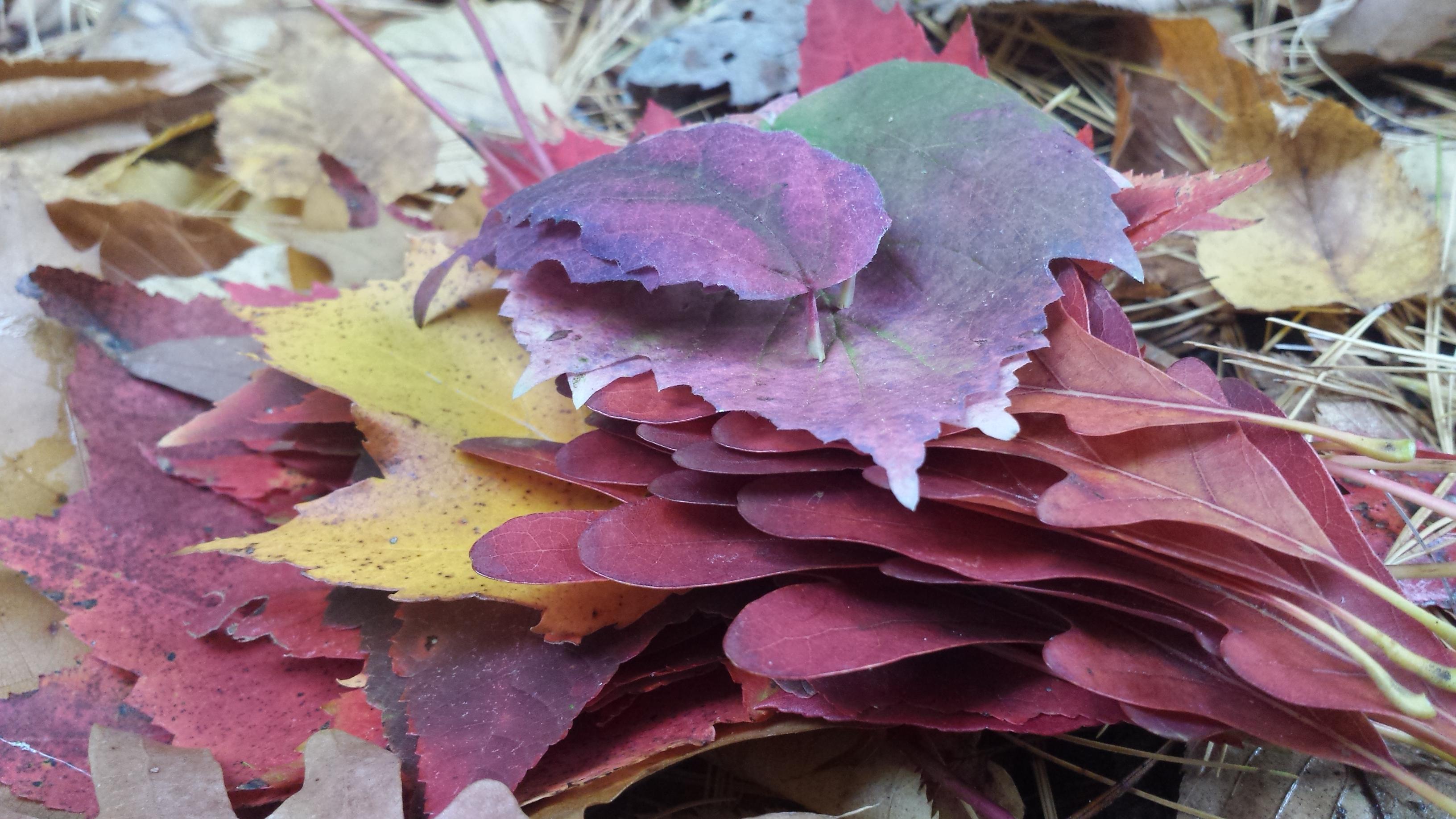 leaves_1